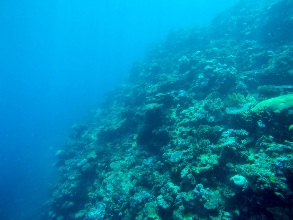 Great Barrier Reef with Reef Experience